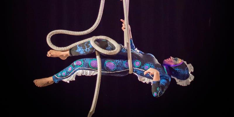 Hamilton Aerial Group Cabaret Photo from 2018
